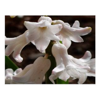 Weiße Garten-Blumen Postkarte
