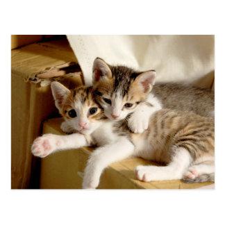 Weiße graue gestreifte Tiger-Kätzchen-Freunde Postkarte