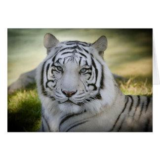Weiße Gruß-Karte des Tiger-(v2) personifizieren Grußkarte