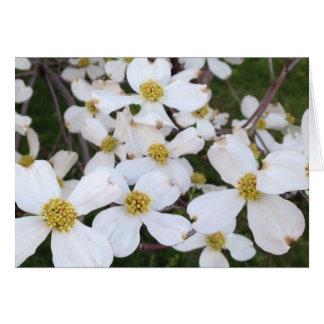 Weiße Hartriegel-Blumen Ihre Mitteilungs-Karten Karte