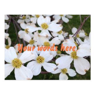 Weiße Hartriegel-Blumen Ihre Wort-Postkarten Postkarte