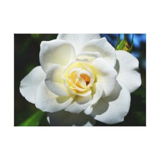 Weiße Hochzeits-Rose Gespannter Galeriedruck