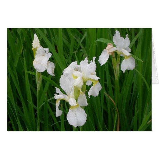 Weiße Iris Grußkarte
