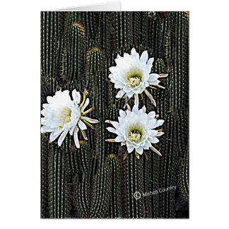 Weiße Kaktus-Blüte Karte