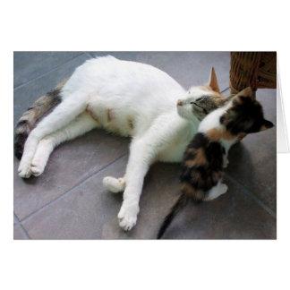 Weiße Katze und Kätzchen Karte