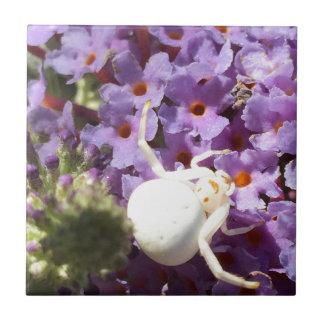 Weiße lächelnde Spinne Fliese