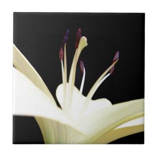 Weiße Lilien-Blumen-Lilien-Blumen-Foto Fliese