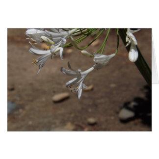 Weiße Lilien der Nil-Karten Karte