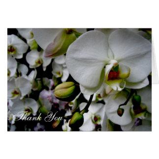 Weiße Orchidee danken Ihnen zu kardieren Karte
