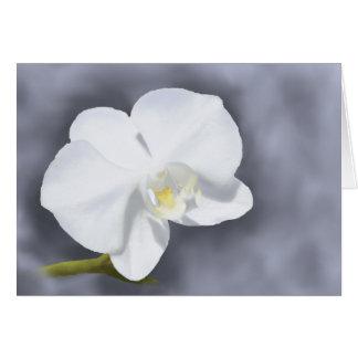 Weiße Orchideen-Blumen-Gruß-Karte Karte