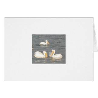 Weiße Pelikan-Anmerkungs-Karte Karte