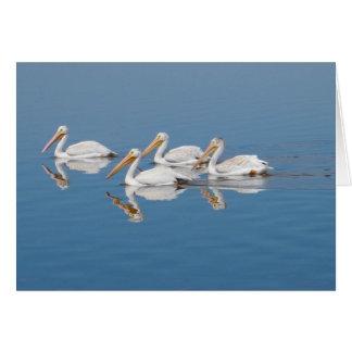 Weiße Pelikane auf Barr See Karte