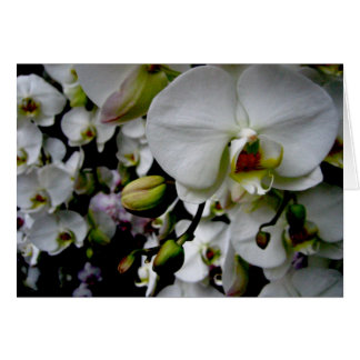 Weiße Phalaenopsis-Orchidee Notecard Karte
