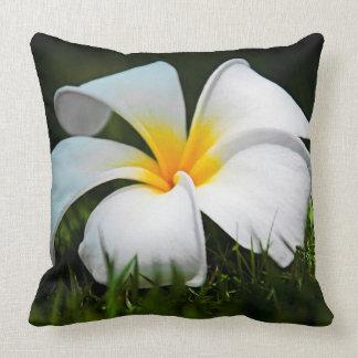 Weiße Plumeriafrangipani-Hawaii-Blume Zierkissen