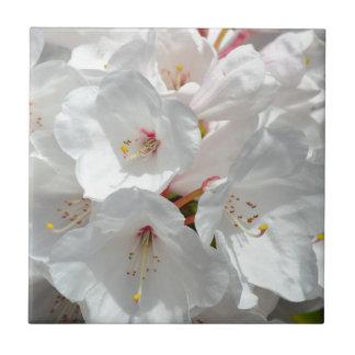 Weiße Rhododendron-Blumen im Frühling Keramikfliese