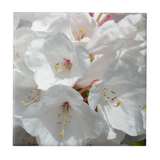 Weiße Rhododendron-Blumen im Frühling Kleine Quadratische Fliese