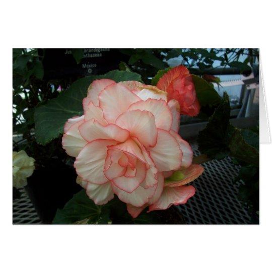 Weiße Rose mit rosa Rand Karte