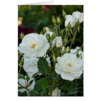 Weiße Rosen mit grünem Hintergrund Karte