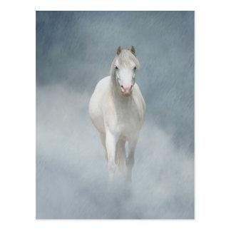 weiße Schönheit Postkarte