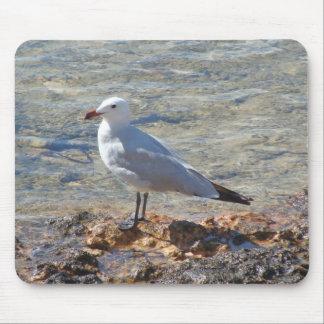 Weiße Seemöwe - Mousepad