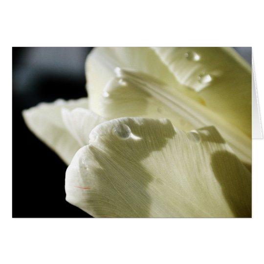 Weiße Tulpe Karte