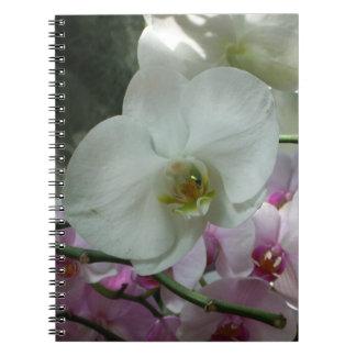 Weiße und lila Orchideen Notizblock
