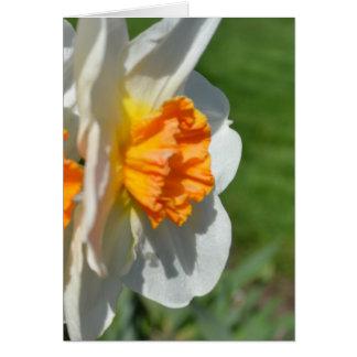 Weiße und orange Narzisse Karte