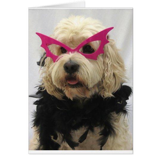 weißer Hund, Kostüm, lustig, Spaß, Gläser auf Karte