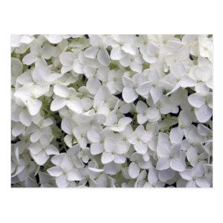 Weißer Hydrangea Postkarte