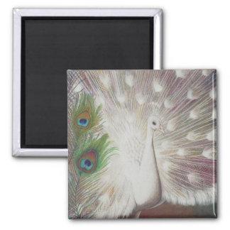 Weißer Pfau und grüne Pfau-Federkunst drucken Quadratischer Magnet