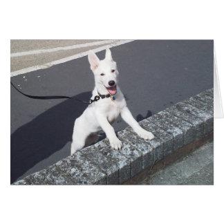 Weißer Schäferhund Walkies Karte
