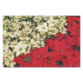 Weißer und roter Feiertag der Poinsettia-I mit Seidenpapier