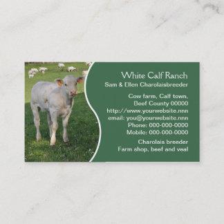 White charolais calf with green panel