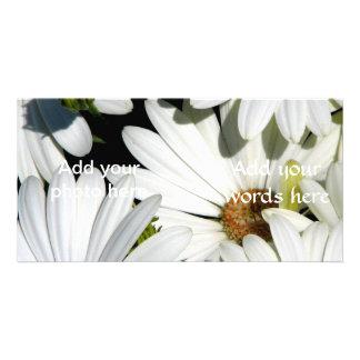 Weißes Gänseblümchen-Blumen Karte