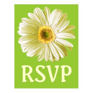 Weißes Gänseblümchen-Blumen-UAWG oder Gewohnheit Postkarte