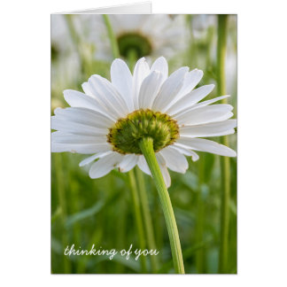 weißes Gänseblümchen-Denken an Sie Karte