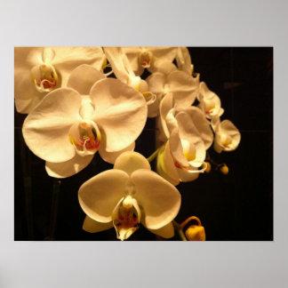 Weißes Orchideenplakat Poster