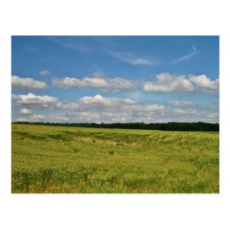 Weizen-Felder Postkarte