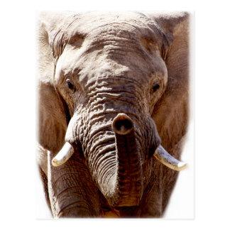 Wellcoda wildes Elefant-Kopf-Tier-Gesicht Postkarte