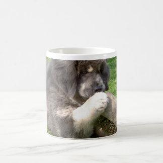 Welpe des tibetanischen Mastiff mit Besen Kaffeetasse