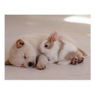 Welpe und Kaninchen Postkarte