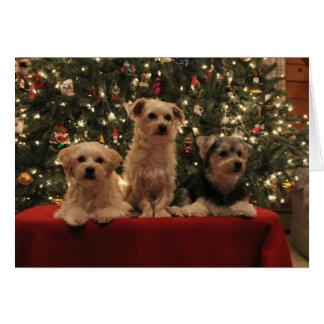 Welpen-Trio-Weihnachtskarte Karte