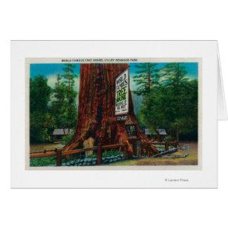 Weltberühmtes Baum-Haus, Lilley Rotholz-Park Karte