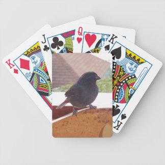 Wenig Antillean Bullfinch Pokerkarten