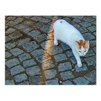 Wenig Punkt Ephesus Katze Postkarten