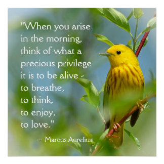Wenn Sie Inspirations-Zitat Marcus Aurelius Poster