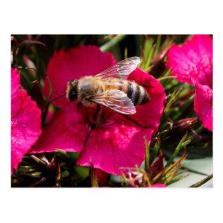 Wespe auf Blume Postkarte