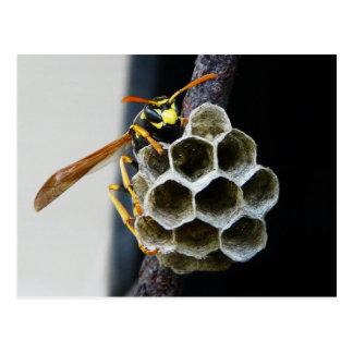 Wespe-Nest und Arbeitskraft Postkarte