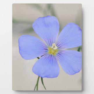 Western-blaue Flachs-Blüte Fotoplatte