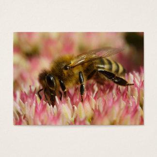 Western-Honig-Bienen-Makro Visitenkarte
